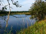 Český rybník